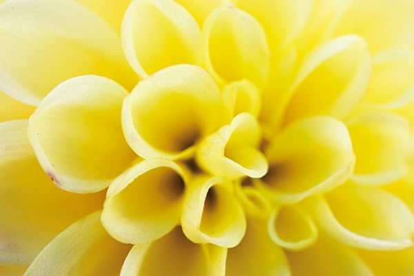 1.0 x image of flower