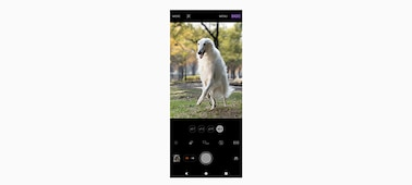 Camera interface showing a white dog on screen