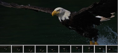 Main image showing bird of prey, with 10 sub-images of frames showing same bird in continuous shooting