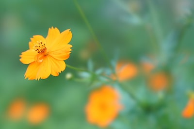 Story_Sony_A7RM2_SEL100F28GM_Yellow_flower