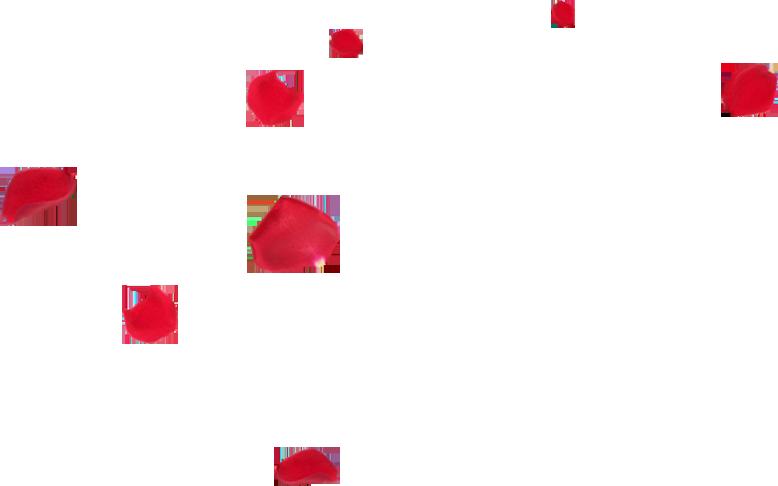 Transparent Falling Petals Gif | www.imgkid.com - The ...